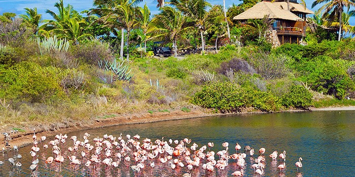 Website-Article-Image---Pink-Flamingos-of-Necker