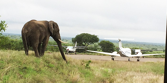 Website-Article-Image-elephant-on-runway
